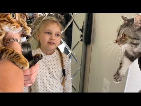 Мили Ванили — ВЛОГ НАШ СЕМЕЙНЫЙ ВЕЧЕР ! Моя новая ПРИЧЁСКА ! Познакомили кошку Бьянку с Синди ! Мили Ванили