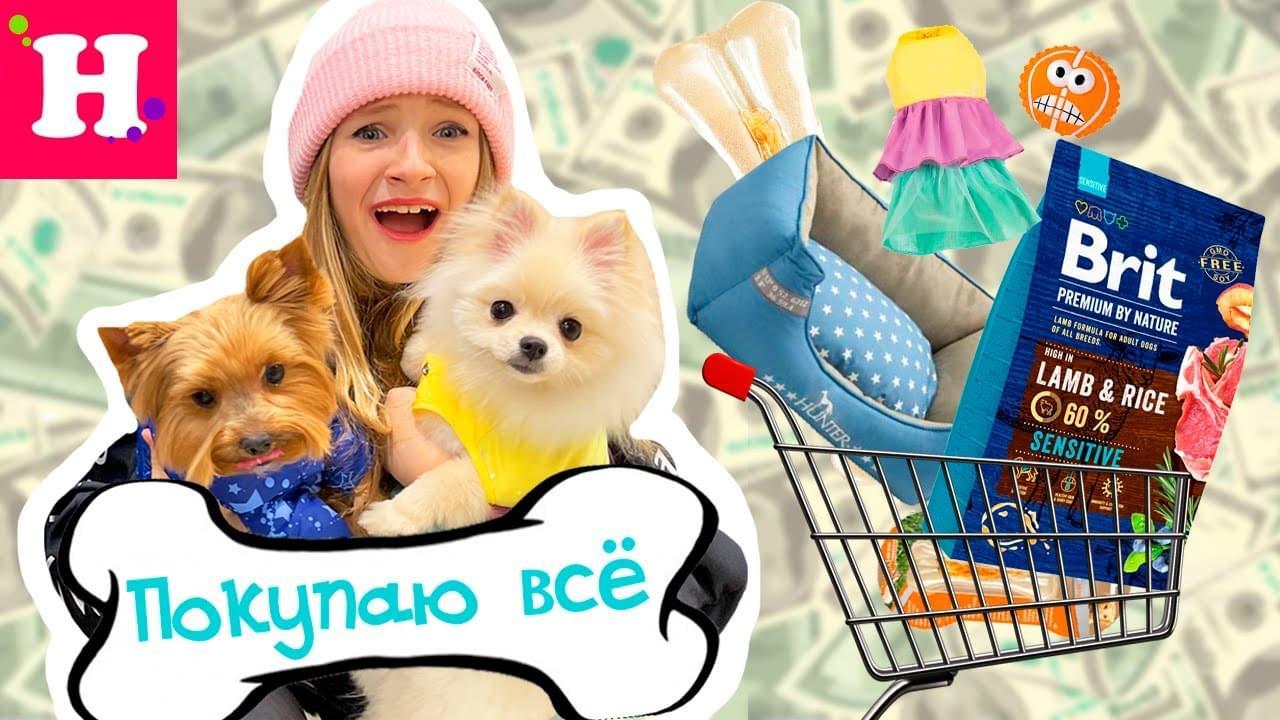 Мисс Николь — Собака сама выбирает, что купить в зоомагазине! Покупаю ИМ всё к чему она прикоснется в магазине