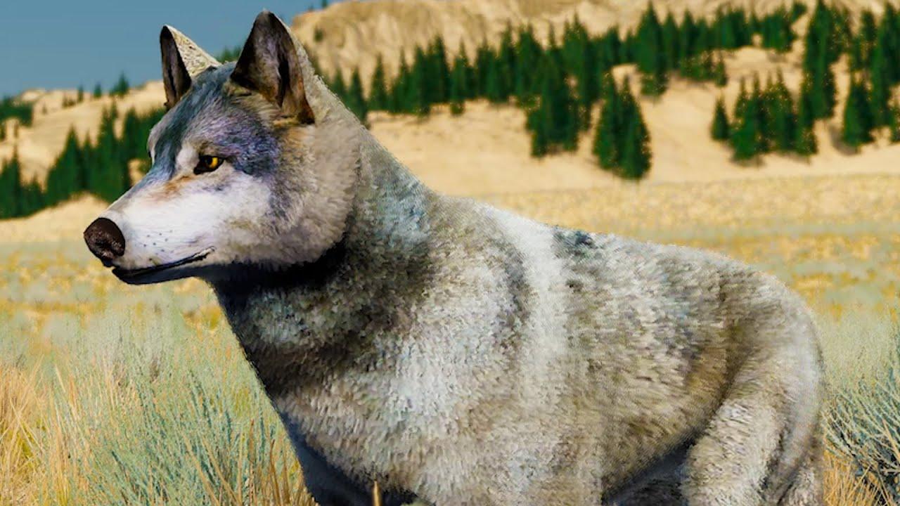 Пурумчата — Сим Волков #1 Кид в новом симуляторе Wolf Quest. Питомец Альфа на пурумчата