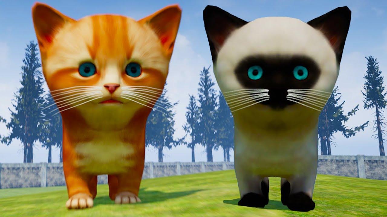 Пурумчата — Симулятор Сумасшедшего Котенка #2 Кот Зомби, рыжий и сиамский Котик в Kitten Madness на пурумчата