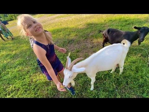 Мили Ванили — Едем кормить КОЗОЧЕК ! Лето в деревне ! Алиса и Вероника в восторге от козочек! Развлечения для всех
