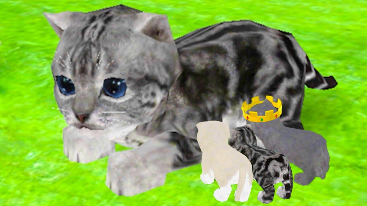 Пурумчата — Кошка Симулятор #4 Обновление. Кид в Онлайн среди котов в Cat Simulator на пурумчата