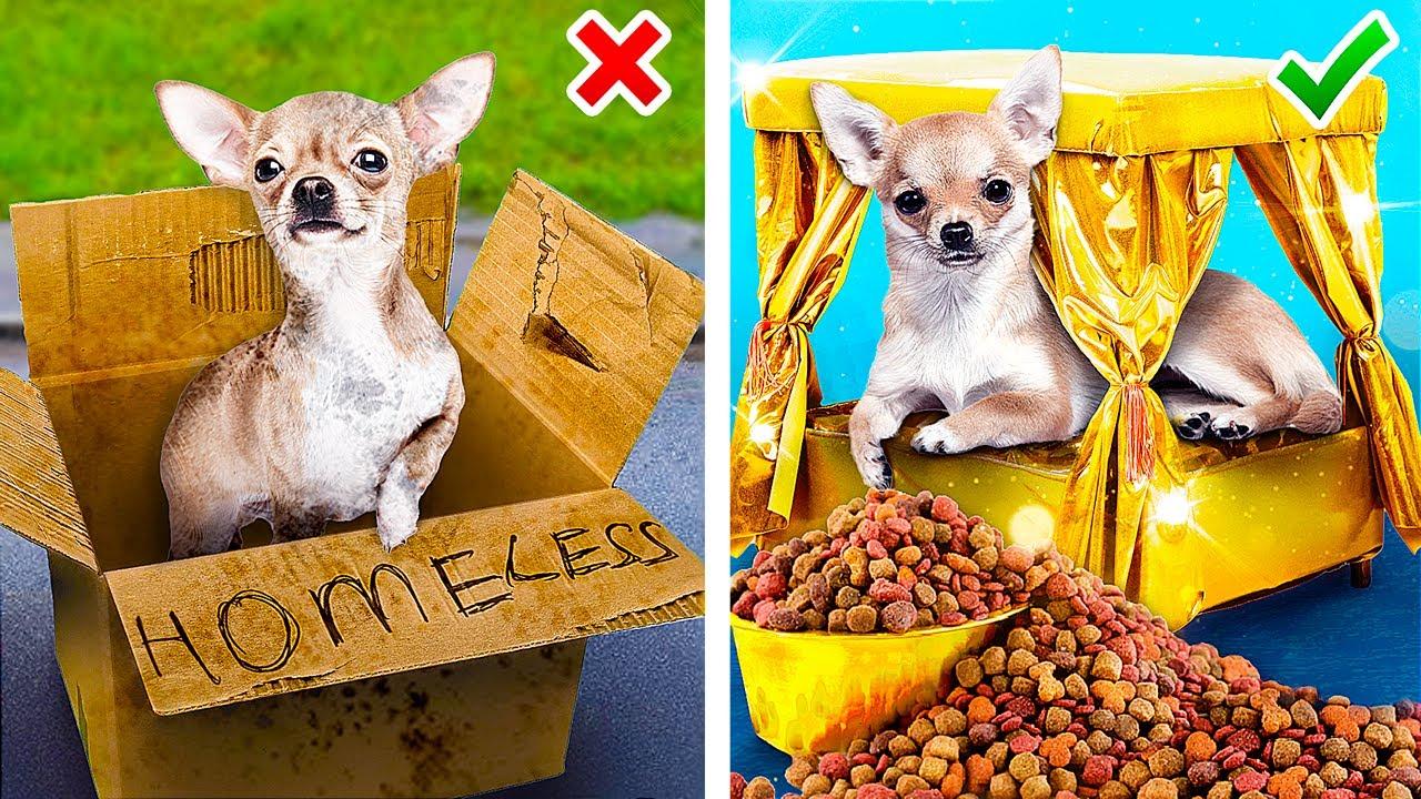 Трум Трум — Если бы миллионеры приютили собаку!